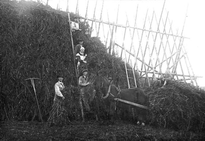 1923, Stordal, Tjörn. Kragemärr med gråärt