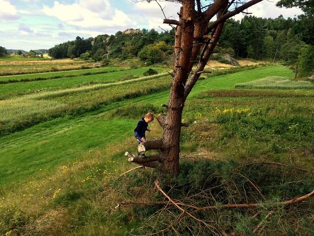 Hjälpredan föredrog att klättra i träd.