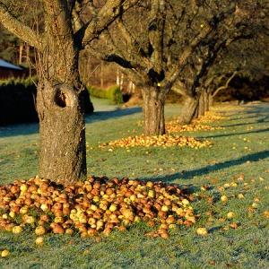 sida_bondepraktikan-september-frukt