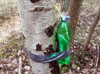 Ny flaska uppsatt
